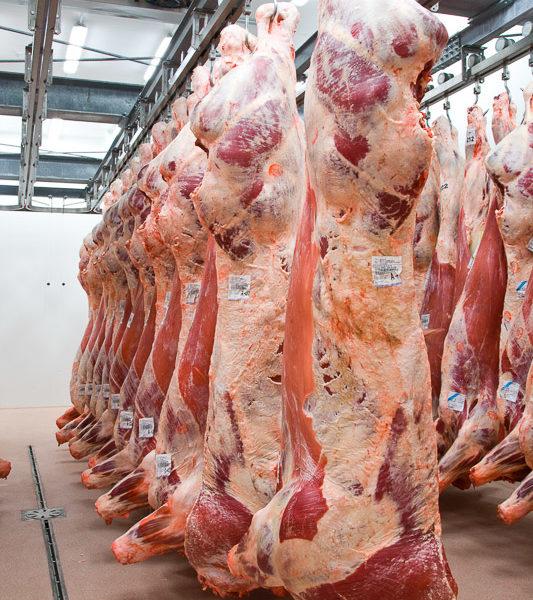 Tagli interi vitello